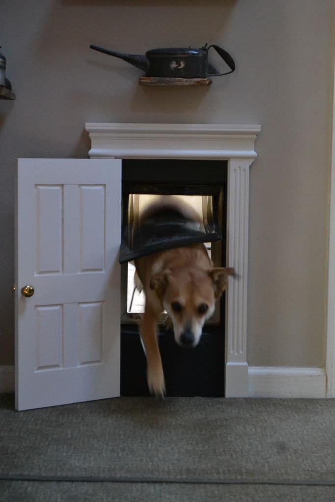 High Class Dog Door Creative Spotting