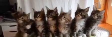 Seven Adorable Kittens Reacting in unison…so cute