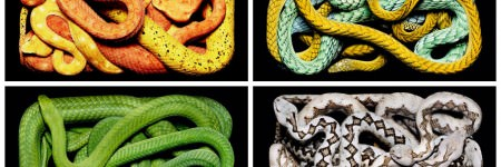 Stunning Photography of Colorful Snakes by Guido Mocafico
