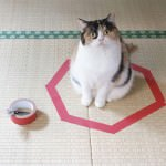 how-to-trap-a-cat-circle-2