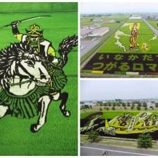 Land Art : Amazing Patterns in Rice Fields