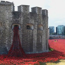 888,246 ceramic poppies infill the tower of london
