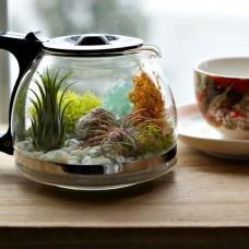 DIY: Coffee Pot Terrarium