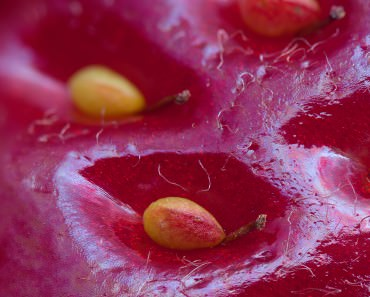 extreme-close-up-of-a-strawberry