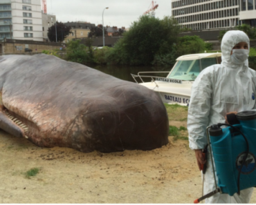 A Beached Whale in France
