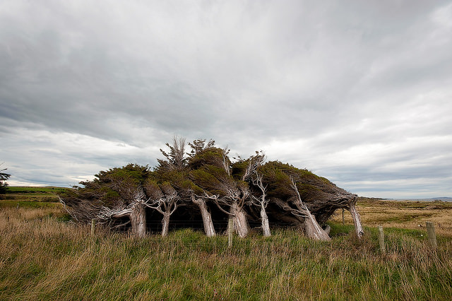 Extreme Antarctic Winds Shape Trees Into Beautiful Forms (Slope Point, New Zealand) Animals + Nature