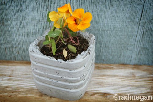 Diy: Concrete Planters DIY + Crafts