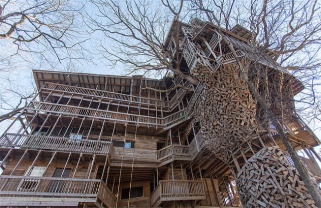 Inside the World's Biggest Tree House Animals + Nature Architecture + Interiors