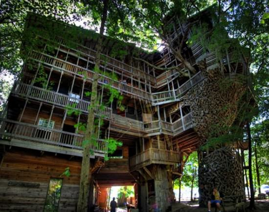 inside the worlds biggest tree house animals nature architecture interiors - Biggest House In The World Inside