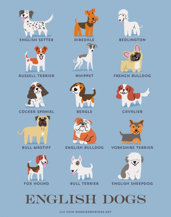 Dogs Of The World: Posters Showing The Origins Of 200+ Dog Breeds Animals + Nature Art + Graphics