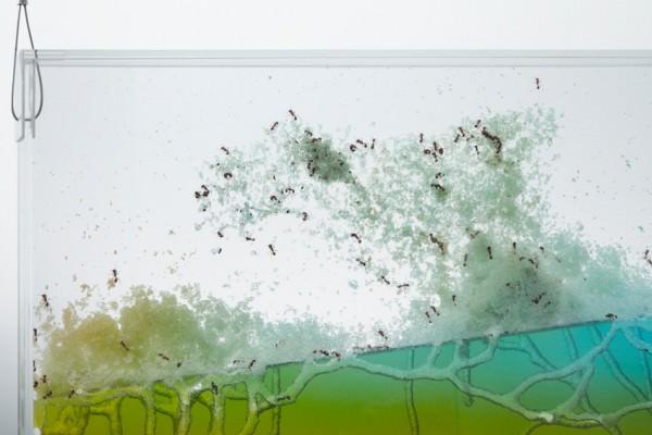Ants Create Sculpture in Plexiglass Animals + Nature Art + Graphics