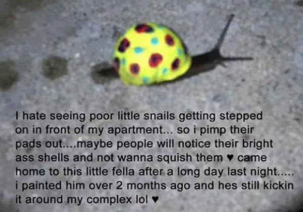 Save The Snails, Pimp Their Shells! Animals + Nature