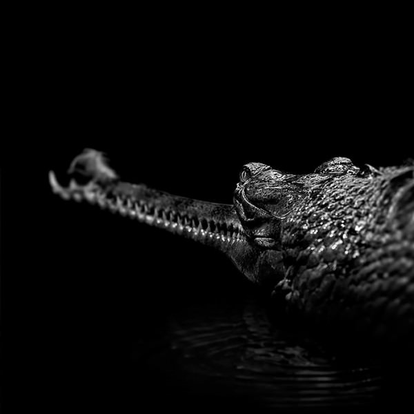 B&w Animal Photography by Lukas Holas Animals + Nature