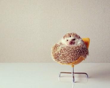 darcytheflyinghedgehog_Instagram_006