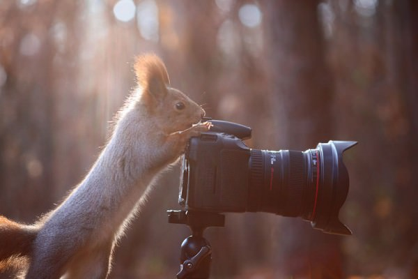 Cute Squirrel Photo by Vadim Trunov Animals + Nature Photography