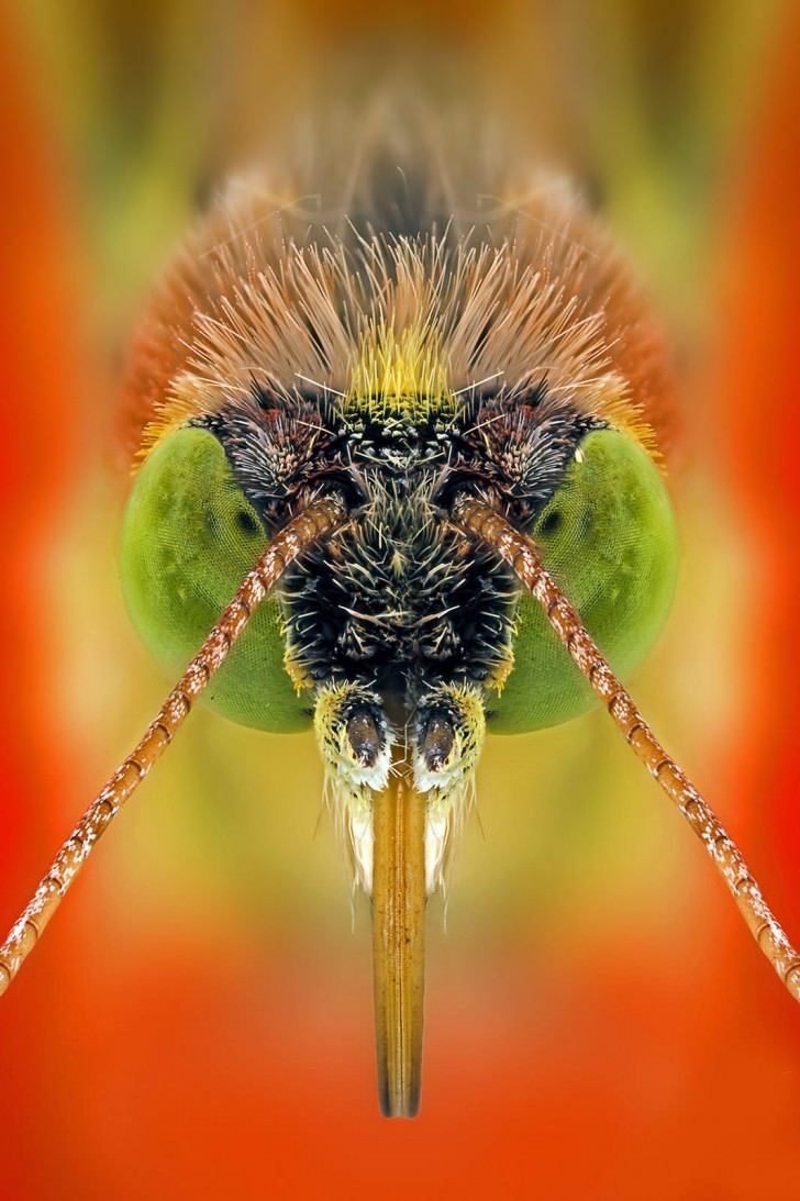 Macro Photography Portraits Of Insects By Paulo Latães Animals + Nature Photography