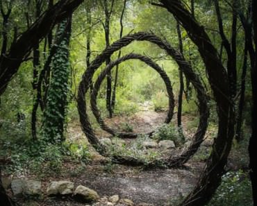 forest-land-art-nature-spencer-byles-fb__700