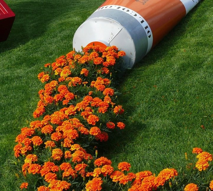 When Street Art Meets Nature: Tube of Orange Paint Leaks Marigolds Animals + Nature Art + Graphics