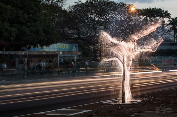 Trees Glowing Sparks by Vitor Schietti Photography