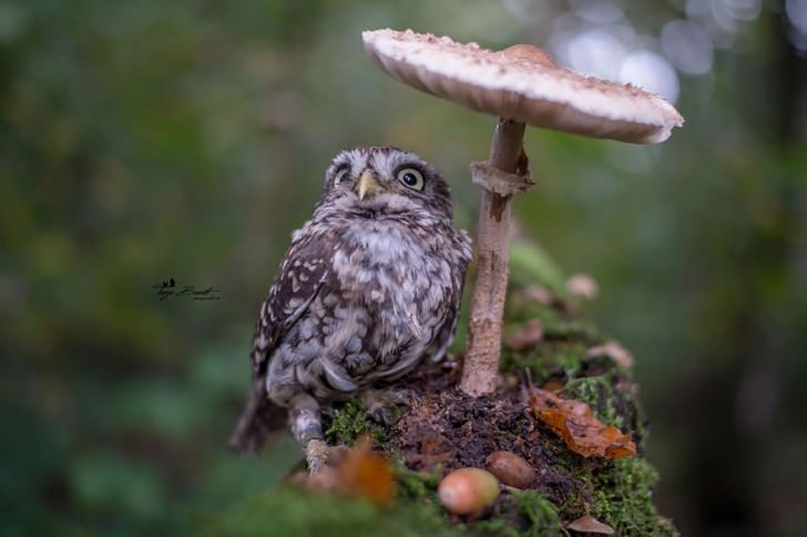 Cute Photo Of A Tiny Owl Hiding From The Rain Photography