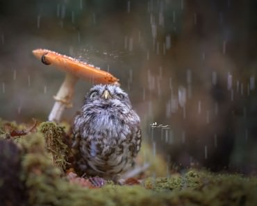 owl-and-mushrooms-tanja-brandt-1