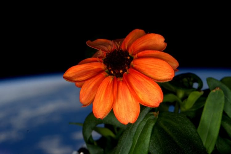 The First Space Flower Animals + Nature