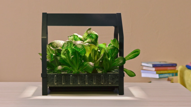Ikea's New Indoor Gardening Kit Will Bring Hydroponics To The Masses Animals + Nature