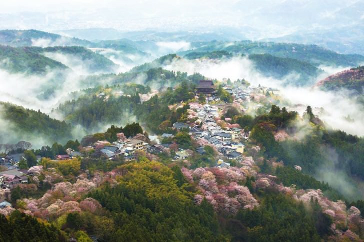 Magical Pics Of Japan's Cherry Blossom By National Geographic Photography