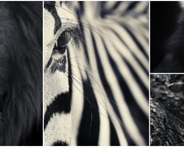 Amazing Black & White Animal Photographs by Antti Viitala