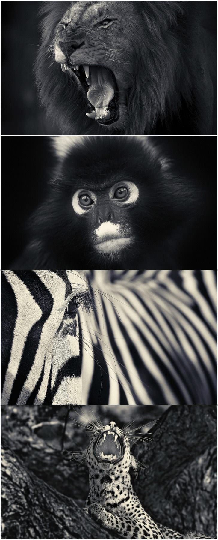 Amazing Black & White Animal Photographs by Antti Viitala Animals + Nature Photography