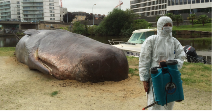 A Beached Whale in France: the Big Buzz Art + Graphics