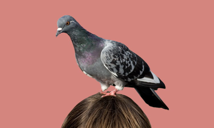 Are You Smarter than a Pigeon? | Geek Universe