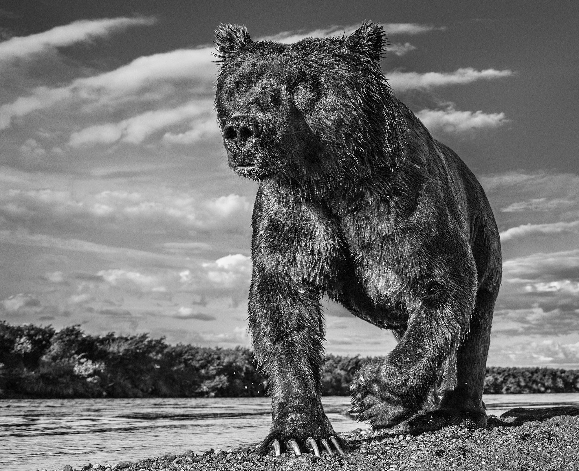 Astonishing Images of Wildlife That Can Help You Raise Your Game | Geek Universe