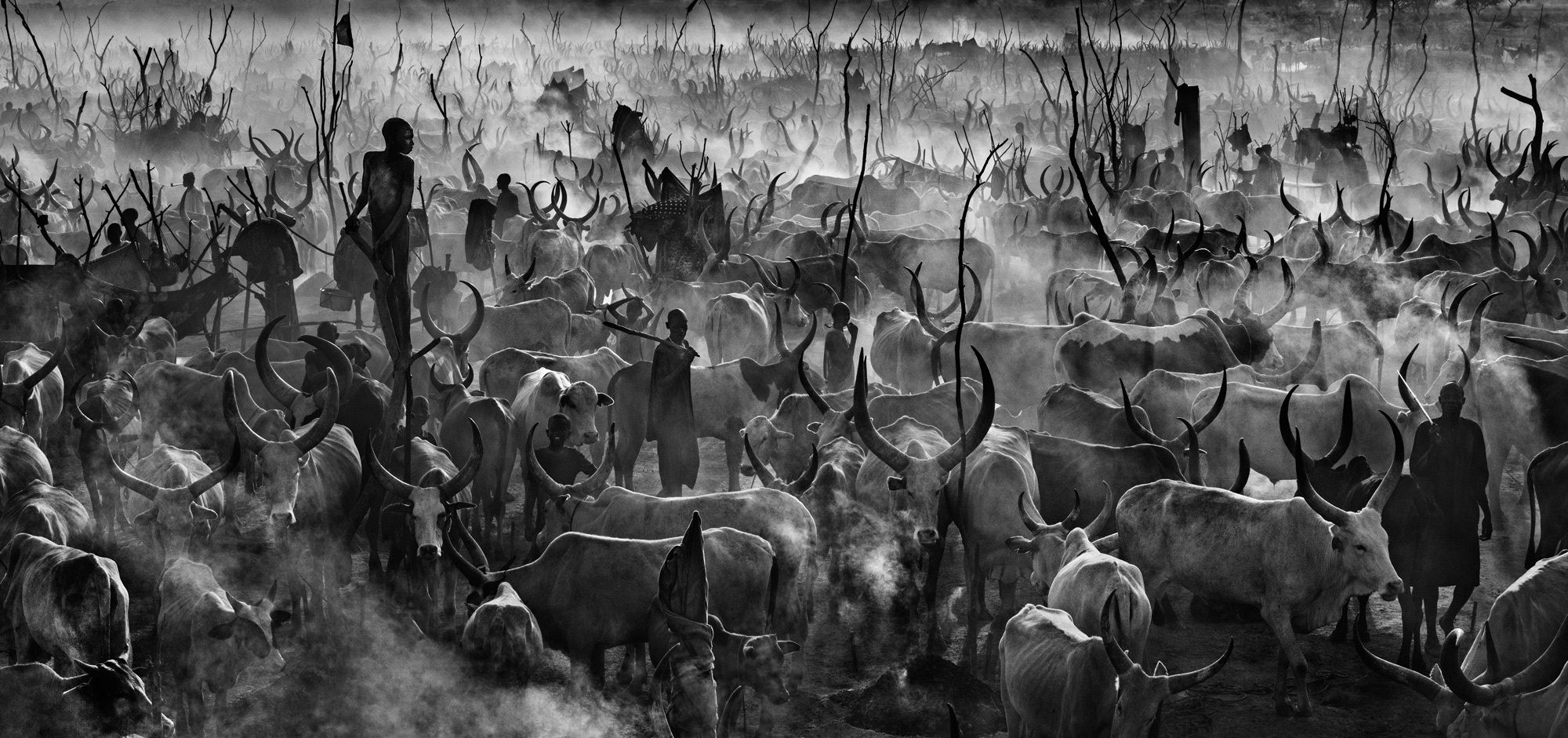 Astonishing Images of Wildlife That Can Help You Raise Your Game   Geek Universe