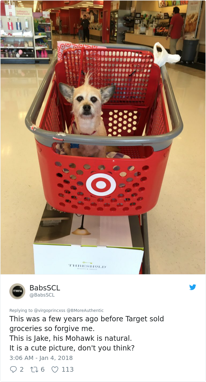 Dog Goes To Target, Has The Best Time Of Her Life Funny