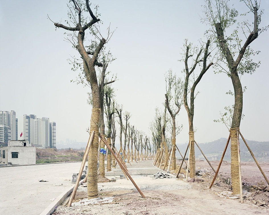China's Ready-made Urban Forests | Amusing Planet Photography