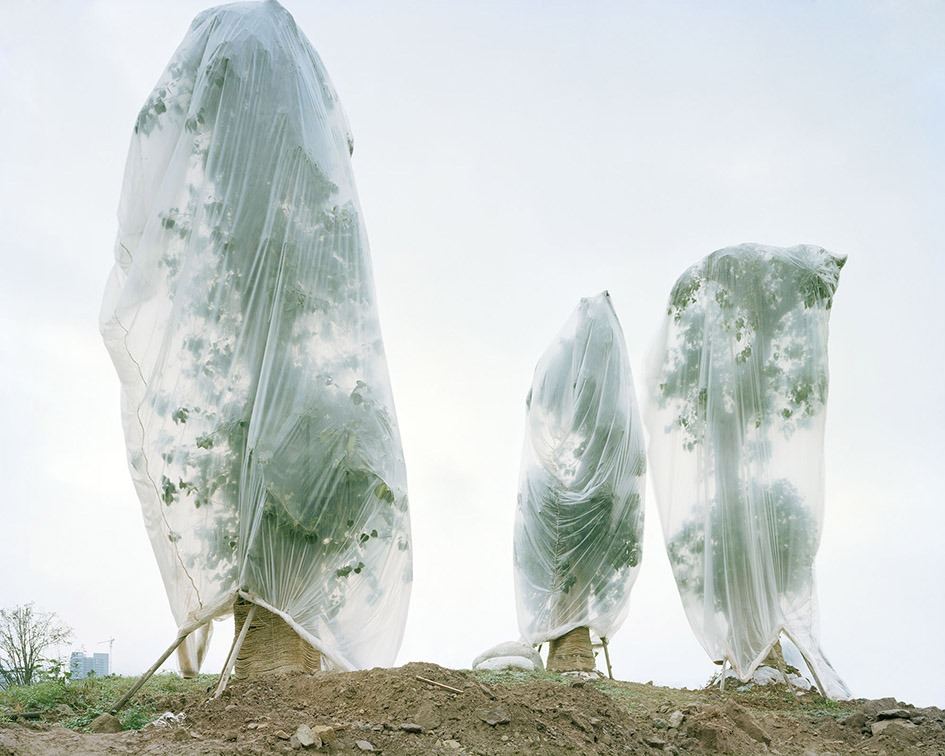 China's Ready-made Urban Forests   Amusing Planet Photography