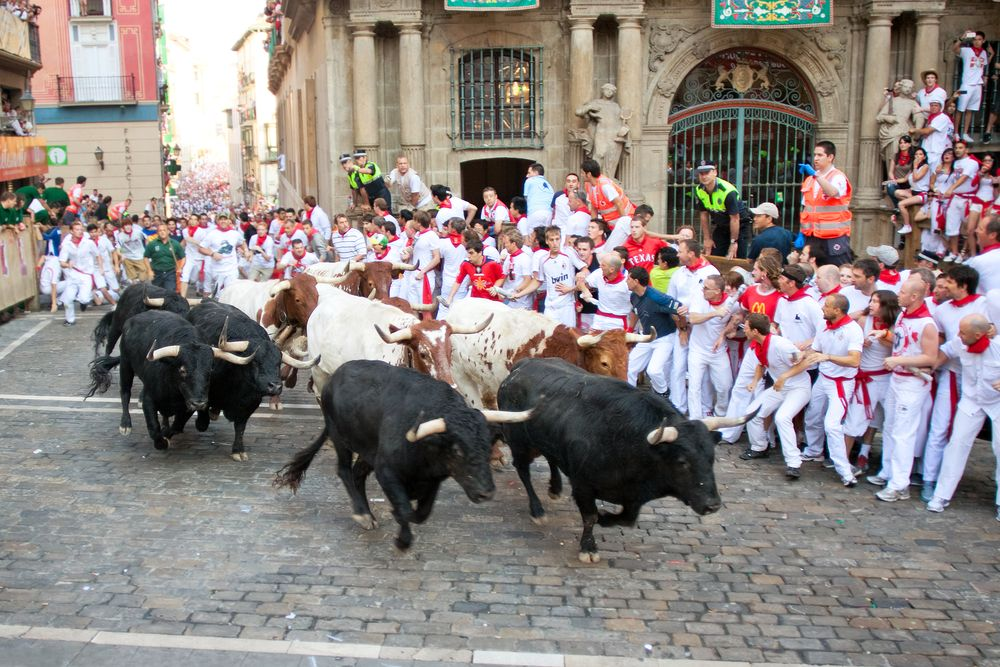 Bull Running in Britain | Amusing Planet Photography